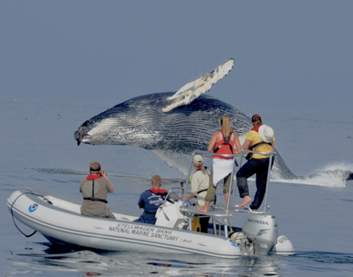 Whale researchers observe a humpback whale in Stellwagen Bank National Marine Sanctuary off the coast of Massachusetts in the United States. Photo Credit: NOAA, NOAA Fisheries permit #14245, with minor cropping and provided under Attribution 2.0 Generic Creative Commons license