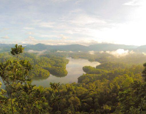 rainforest-eutah-mizushima-OWwK_0_EnxY-unsplash