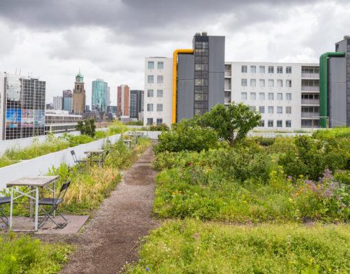 An urban rooftop garden
