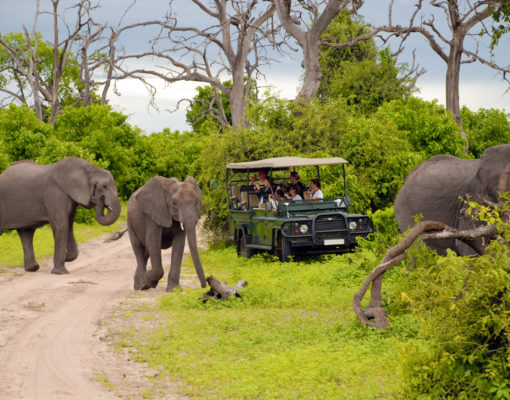 Tourists photographing elephants on a preserve.